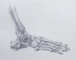 anatomie I anatomy